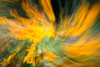 The Spin OF Yellow II