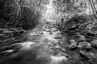 Stream in the Smokies